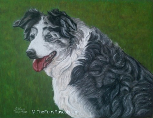 Portrait of Collie in soft pastels - The Furry Rascals Cyprus