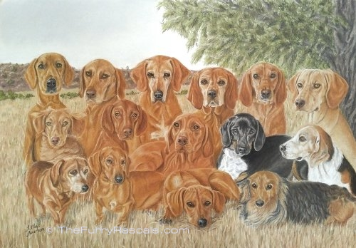 Group of 15 Dogs mainly Vizslas Pastel Portrait Painting in soft pastels - The Furry Rascals, Cyprus