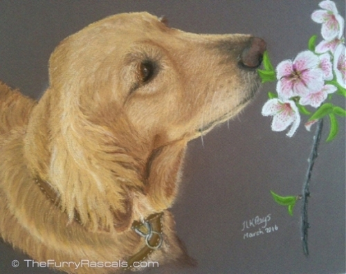 Golden Retriever Dog Pastel Portrait Painting in soft pastels - The Furry Rascals, Cyprus