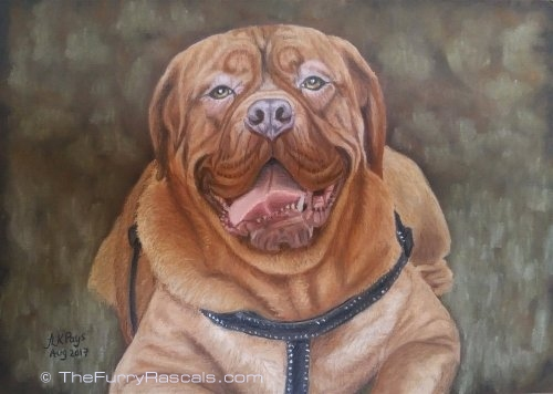 Dogue de Bordeaux French Mastiff Dog Pastel Portrait Painting in soft pastels - The Furry Rascals, Cyprus