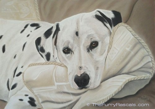 Dalmation Dog Pastel Portrait Painting in soft pastels - The Furry Rascals, Cyprus